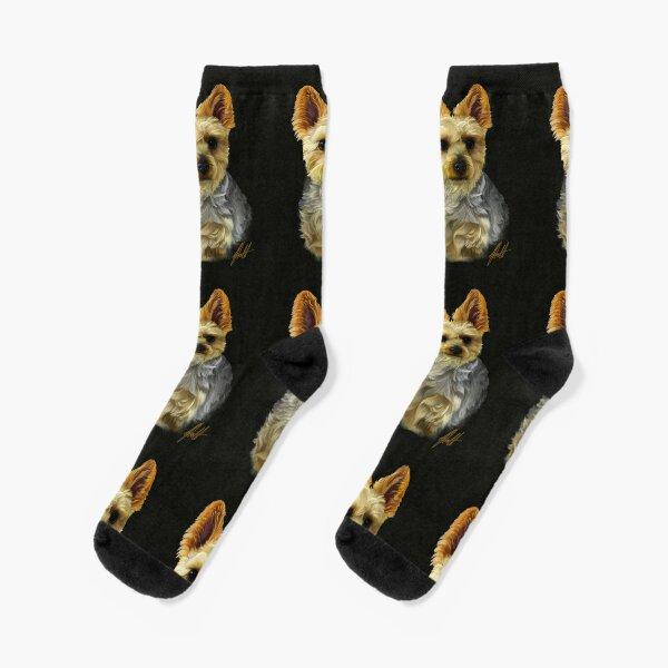 Silky Terrier Socks