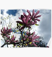 Magnolia bliss Poster