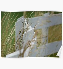 Curving White Fence Poster