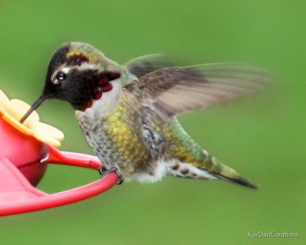 Hummingbird Treat by KarDanCreations