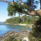 Jervis Bay ~ Huskisson  by Donna Keevers Driver