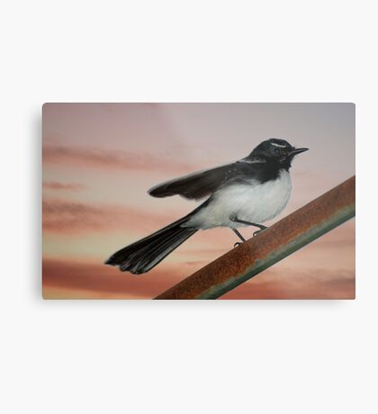 Willy Wagtail 2 Metal Print