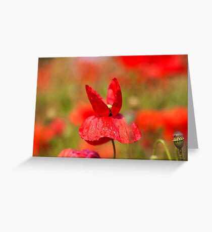Butterfly Poppie Greeting Card