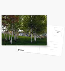 Painted Birch Trees Postcards