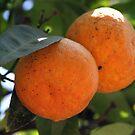 Oranges by Samantha Higgs