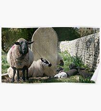 Faithful Flock Poster