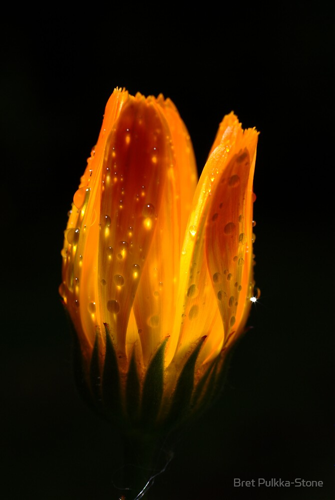 After the rain, the flowers glow by Bret Pulkka-Stone