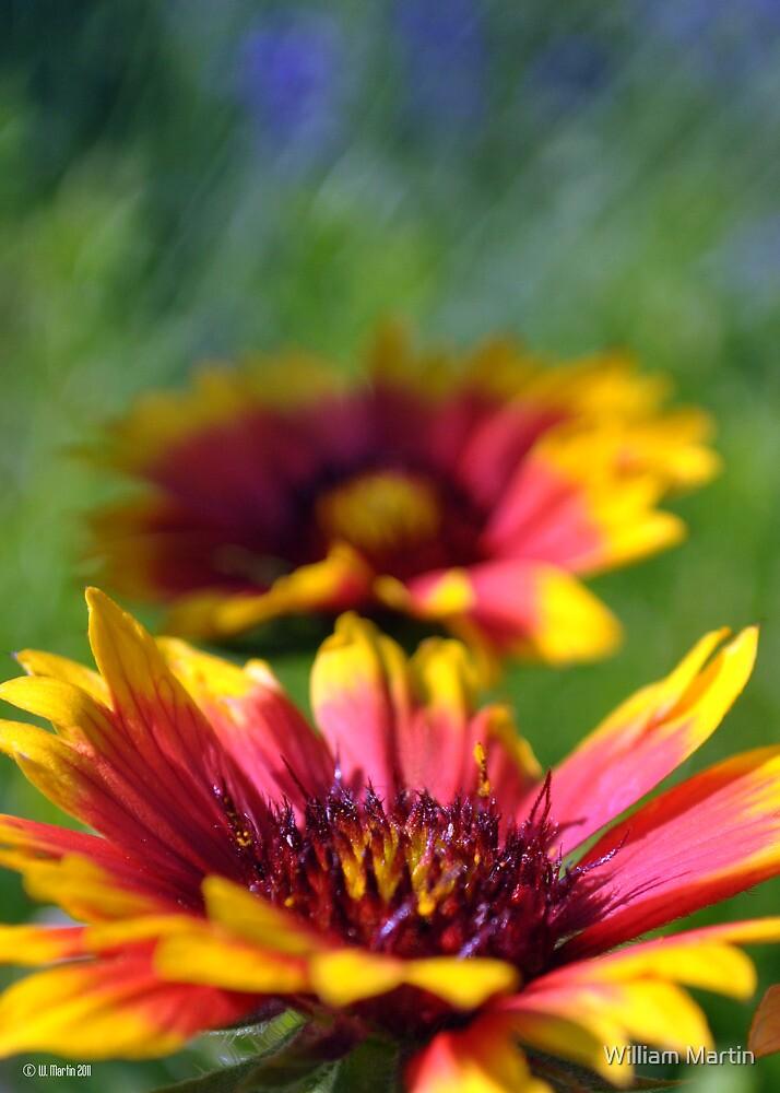 Macro of Arizona Sun in the Garden by William Martin