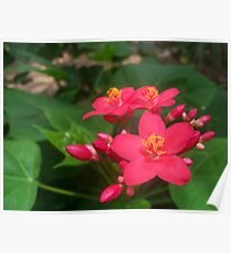 Large-Grouped Pink Flowers Poster