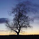 Winter Sunset by MetalPhoto