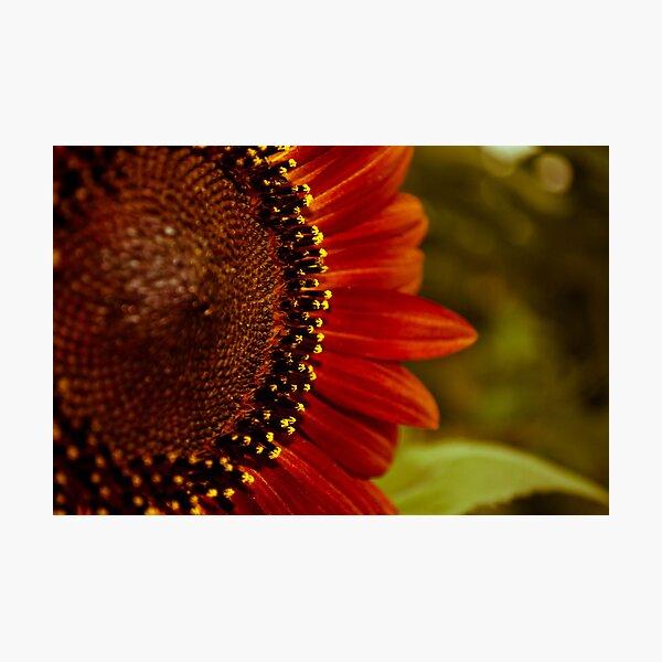 Rusty Sun III Photographic Print