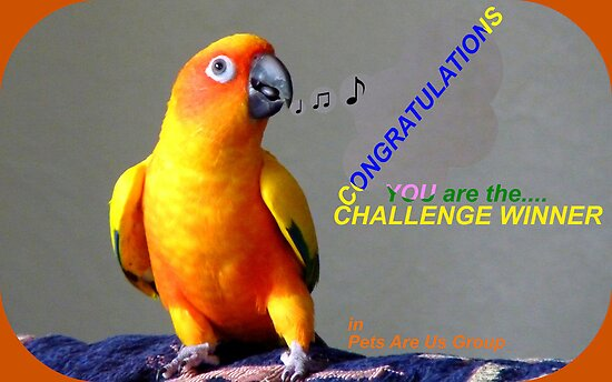 CONGRATULATIONS - Challenge winner - Pets Are Us by AndreaEL