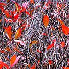 Autumn Abstract by AngieDavies