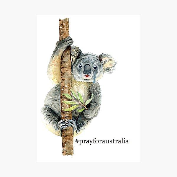 Pray for Australia Koala  Photographic Print