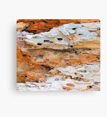 Nature Recycling Nature No. 1 Canvas Print