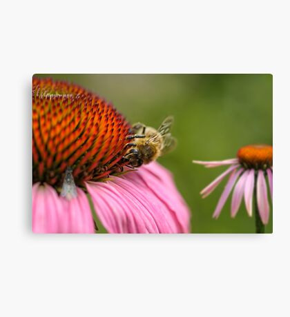 Healthy bee Canvas Print
