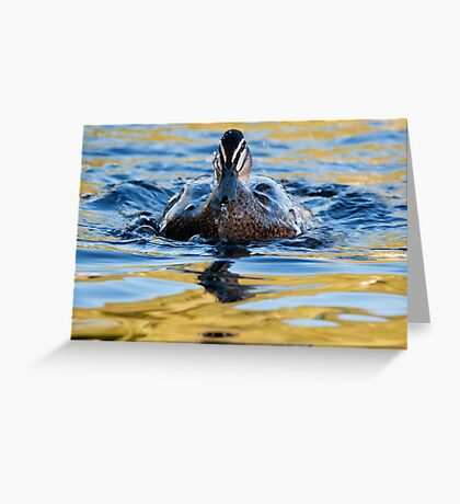 """""""Water Off A Ducks Back"""" Greeting Card"""