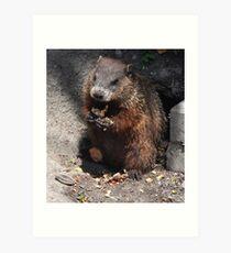 Baby Groundhog Art Print