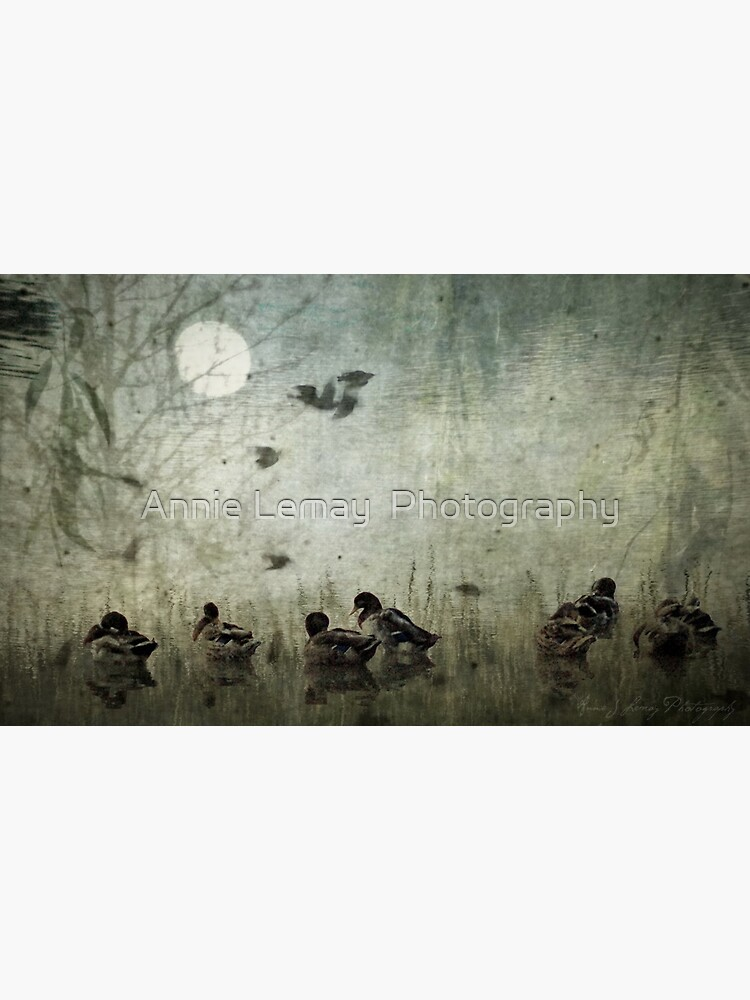 Serenity by ajlphotography