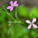 Little Flowers  by Allison  Flores