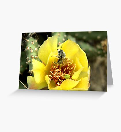 Wild Cacti flower. Greeting Card