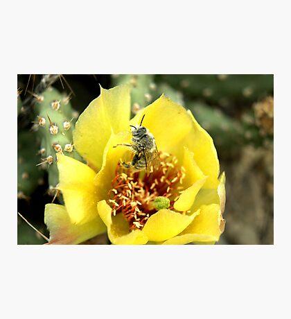 Wild Cacti flower. Photographic Print