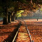 Autumn walkway... by MikeO