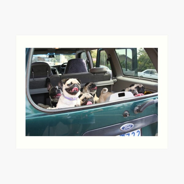 Doggie Car Pooling Art Print