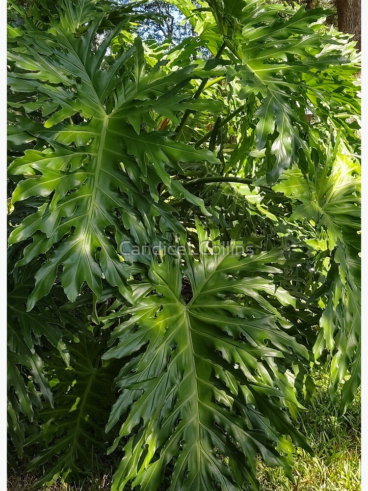 Elephant Ear Plant Photo Art Board Print By Candicelcollins