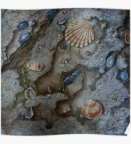 Sand and Shells - oil painting Poster