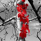 Symbiosis In Red by SuddenJim