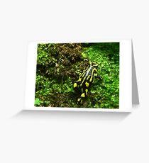 Strolling Southern Corroboree Frog Greeting Card