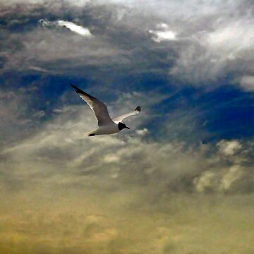 Flight of the Seagull by cometman