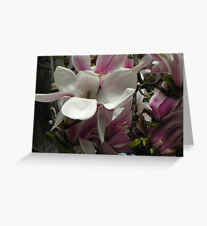 Fabulous Magnolia Greeting Card