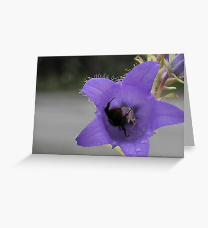 Red Tailed Bee Having Lunch Greeting Card