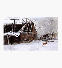 Rustic Barn -- Cue Deer Photographic Print