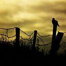 Skywatcher by Agnes McGuinness