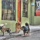 The Dogs of Aguas Calientes by Edith Reynolds
