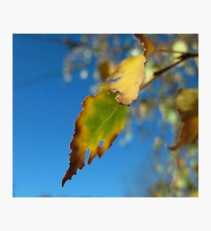 autumn dreams Photographic Print