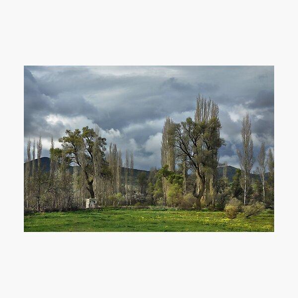 Roadside Trees Photographic Print