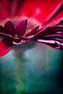 ...nel mio cuore ~ atto primo... by Adriana Glackin