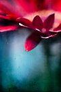 ...nel mio cuore - atto secondo... by Adriana Glackin
