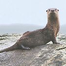 Portrait of a Young Otter by Carl Olsen