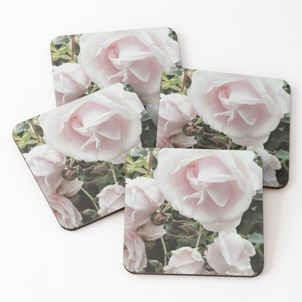 Palest pink perfect roses Coasters (Set of 4)