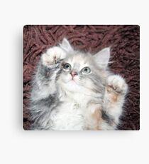pretty grey and white kitten  Canvas Print