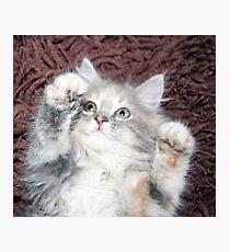 pretty grey and white kitten  Photographic Print