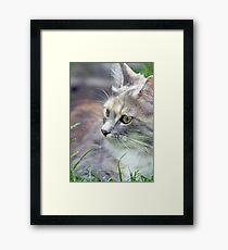 beautiful kitten  Framed Print