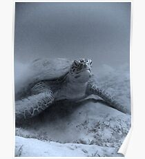 Giant Turtle Poster