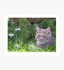 sweet kitten  Art Print