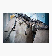 Cool Albertosaurus Photographic Print